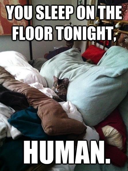 Superior cat is superior.... Cats.... Superior cat is superior Cats