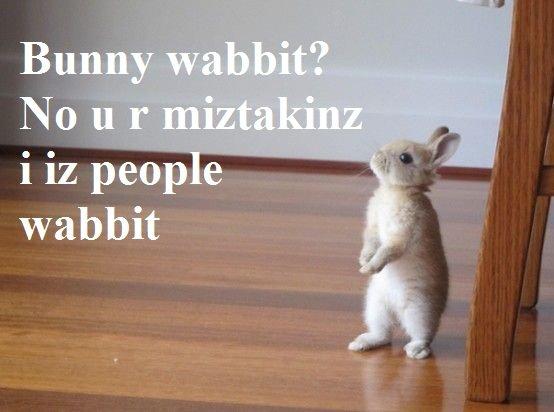 wabbit. oc. wabbit oc