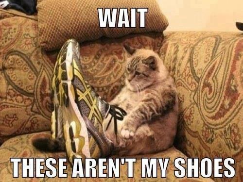 wait. . Cats