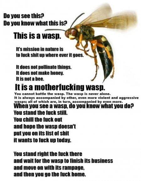 Wasp. . Wasp
