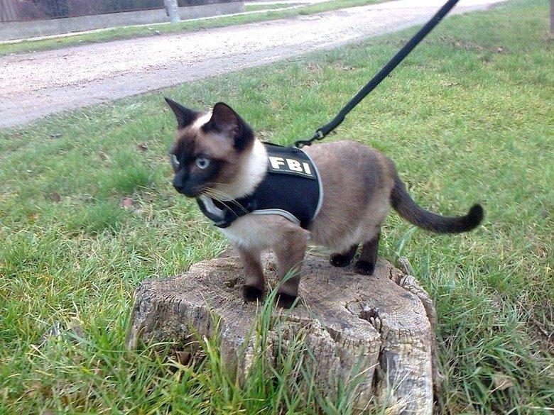 We're Fucked.. .. Feline Booty Inspector We're Fucked Feline Booty Inspector
