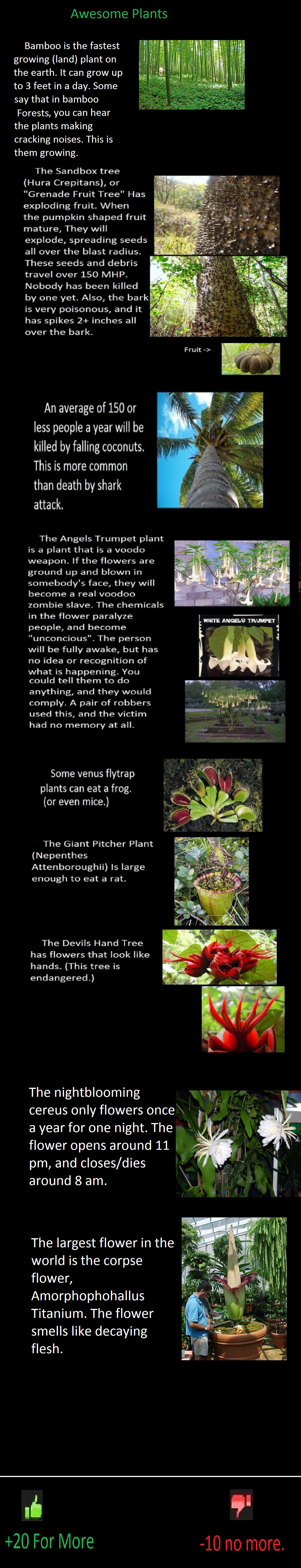 Weird plants. Yeep.. plants WTF weird cool Strange repost OC