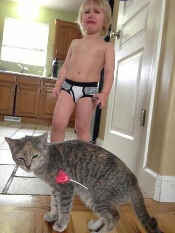 Well fuck. . funny Animals pets Cats fail