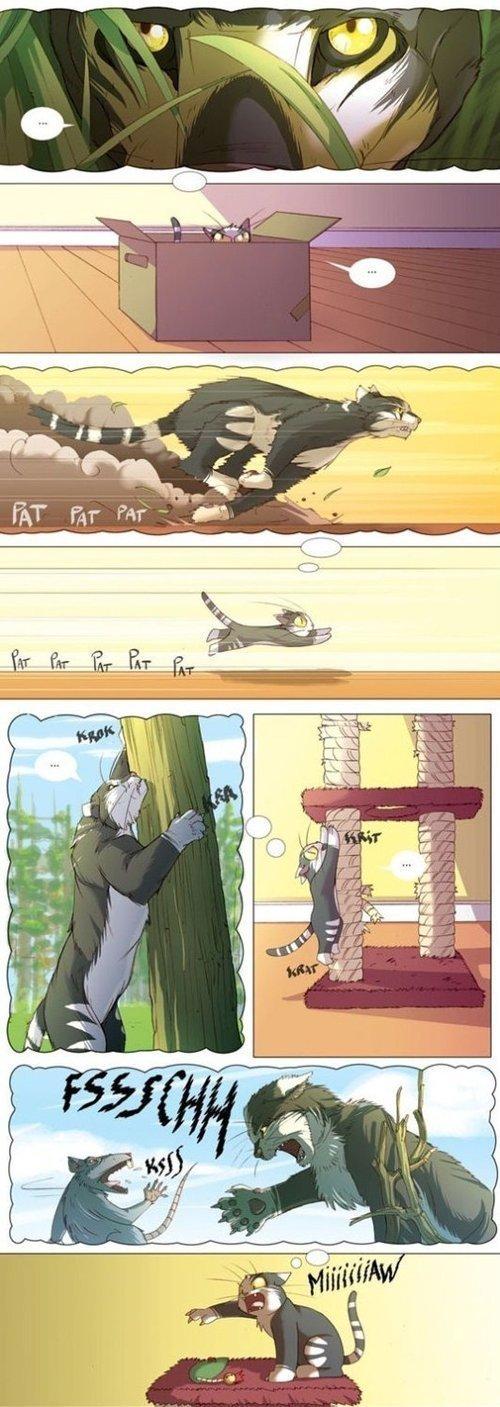 What goes on in a mind of a cat. .. that is sad in a way... Cats