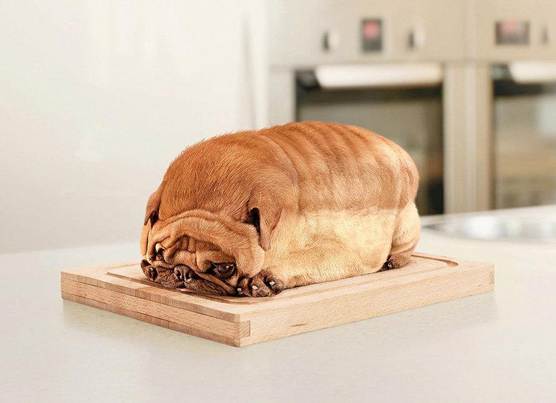 what bread of dog is this?. what bread of dog is this.. wow, it's purebread. what bread of do