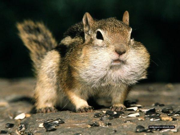 "what u lookin at?. . V, It up srrs ""Calliope's. . ruan squrril"