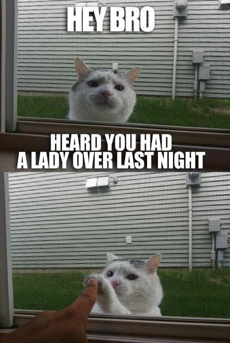 "who da pussy cat. . HEARD ""III HM] MAII. cats are awesome who da pussy cat HEARD ""III HM] MAII cats are awesome"