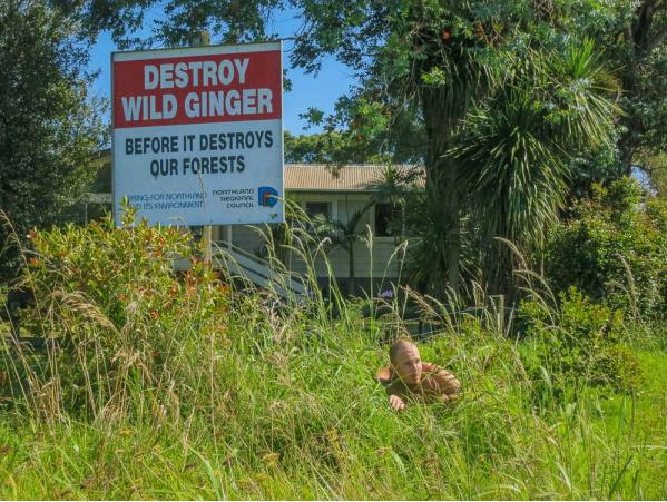Wild Ginger. . Wild Ginger