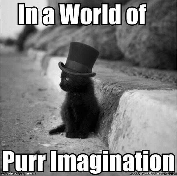 Willy Wonkat. . Willy Wonkat