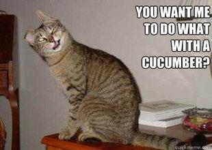 Wtf Cat. . funny cat CUcumber sex