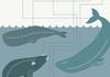 Whale Sperm Infogrpahic. It's Knowledge!