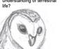 fucking Owls n'shit