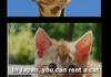 Animal Fact Pt. 1