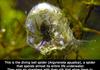 Spiders are geniuses