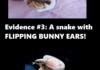 Cute Snake Comp!