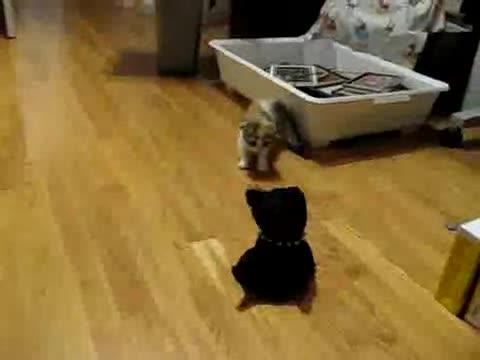 Kitty vs. Robot.. .. flipsy u finnaly flipped
