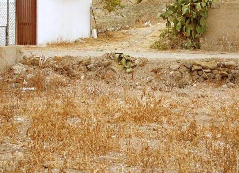 Camouflage. . camo