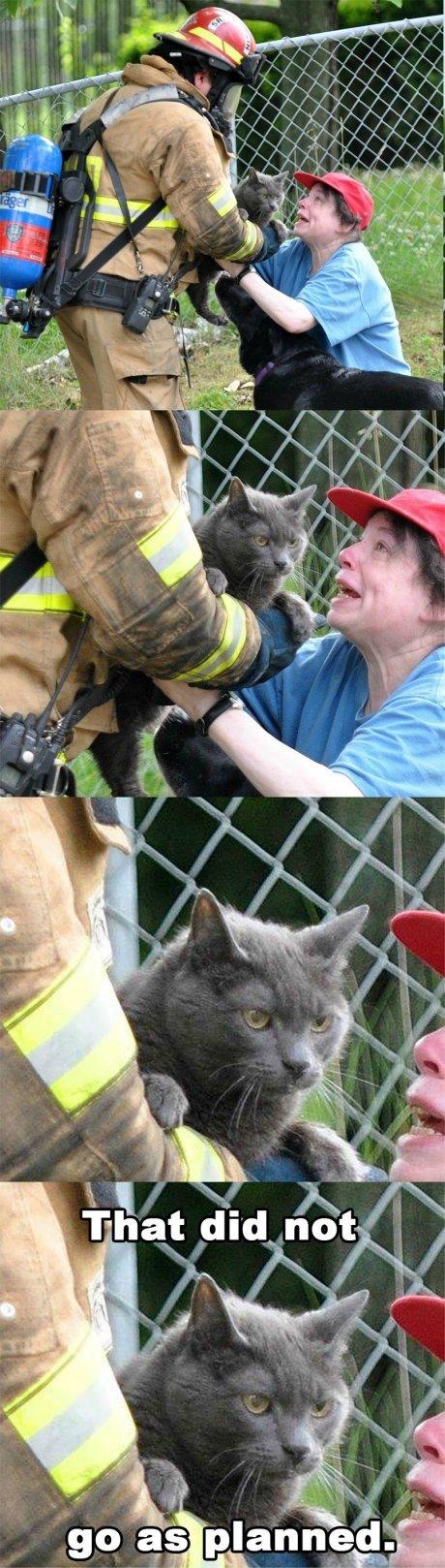 Cat face. . Cat face