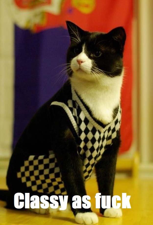 Cat. Kitty cat. Cat Kitty cat
