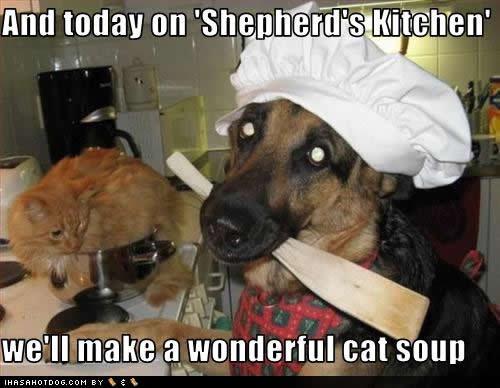 cat soup. . cat soup