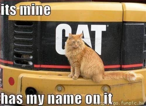 cat. . cat