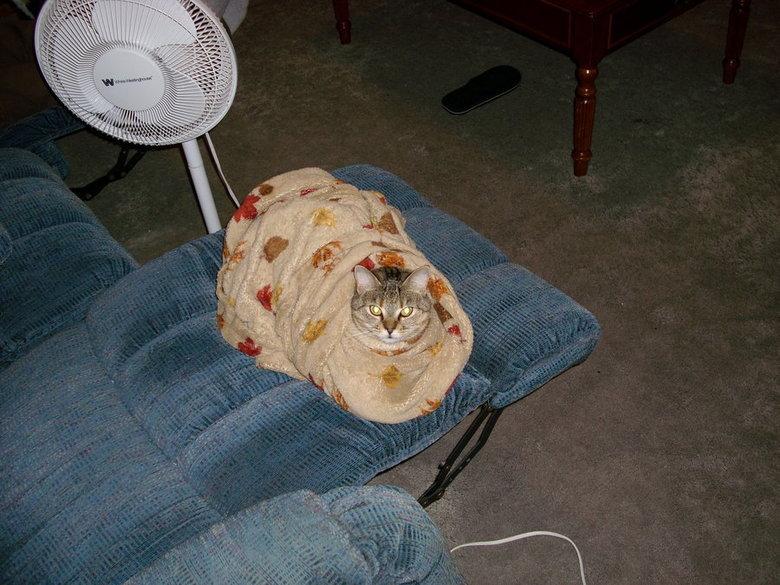 "Cat Burrito. The owner was never seen again..... im sure the correct phrase is ""purrito"" cat"