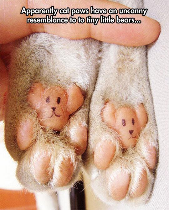 Catbear. Hitler liked cats.. jews like Rats