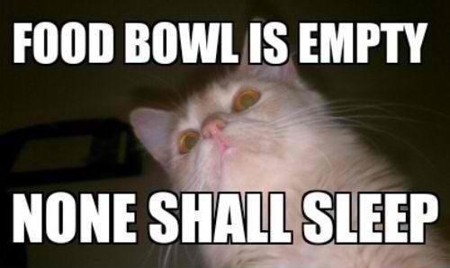 Cats. . IS EMPTY nigger Cats