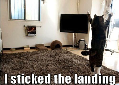 Caturday. Just in time. Caturday cat