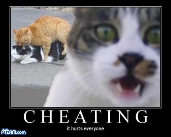 cheating cat. cheating cat. It hurts everyone cheating cat