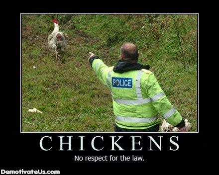Chickens have no respect for the law. . Ne respect for the law. Chickens have no respect for the law Ne