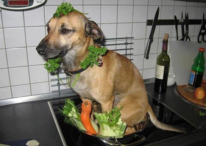 Chinese Salad anyone???. .. Ill be damned! Ha! Chinese Salad anyone??? Ill be damned! Ha!