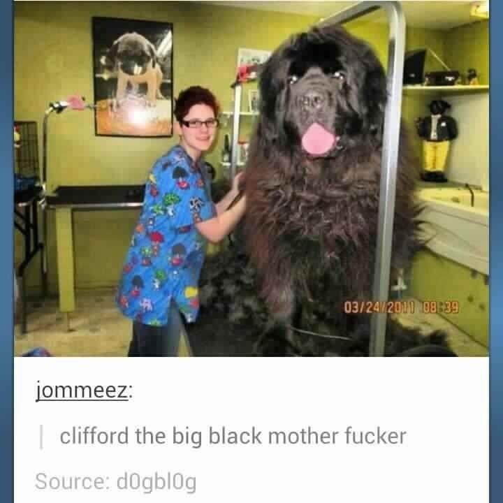 Clifford. . TEREZI Clifford the big black mother fucker clifford the Big black Mother fucker motherfucker Dog nigger