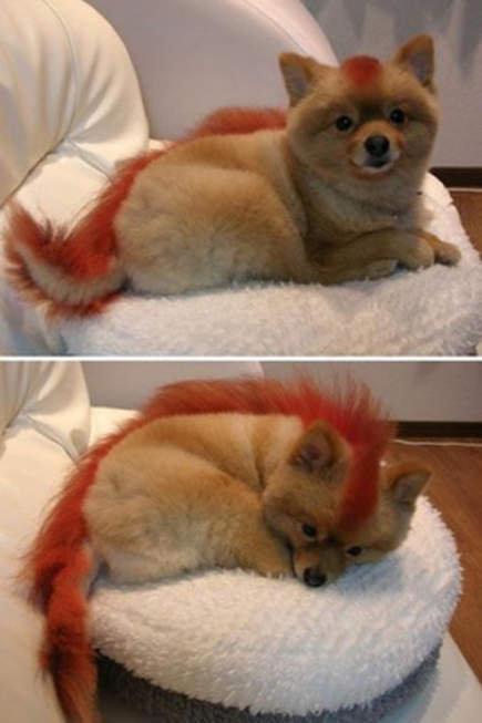 coolest puppy evar!!. . coolest puppy evar!!