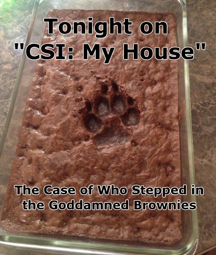 CSI. no it's not mine you stupid dime a dozen .. First thing I thought of. CSI no it's not mine you stupid dime a dozen First thing I thought of