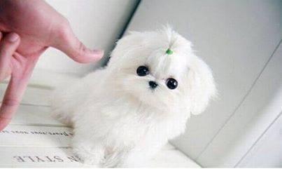 Cute dog . Cute dog <3.. ITS SO FLUFFEH Dog Cute Dog nice dog