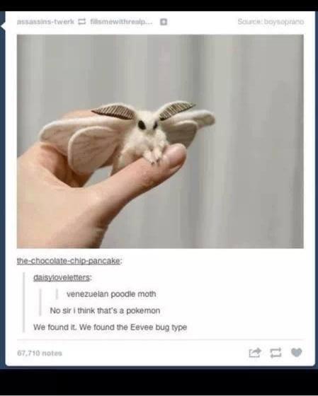 """Cute Moth. . INTEL"""" E IE. n.' ttwy. I will destroy you Cute Moth INTEL"""" E IE n ' ttwy I will destroy you"""