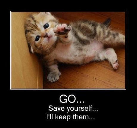 cutiness lvl 93?. . GO. ti Save yourself... I' ll keep them... Just lol