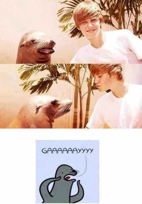 GAAAAAAAAAAAAAY. I am beating dead horse.. What the seal was hoping for GAAAAAAAAAAAAAY I am beating dead horse What the seal was hoping for
