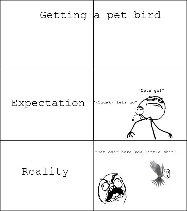Getting a pet bird. Oc by me, made it after getting a new cocketeial :3. Getting a pet bird Expectation _ Reality. Bird thread? Birds