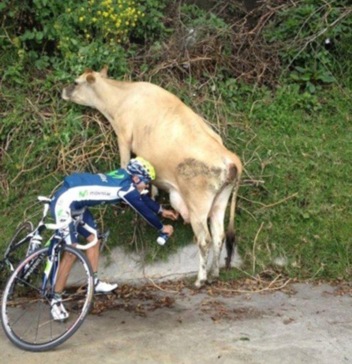 Give me some milk, please!. . Milk