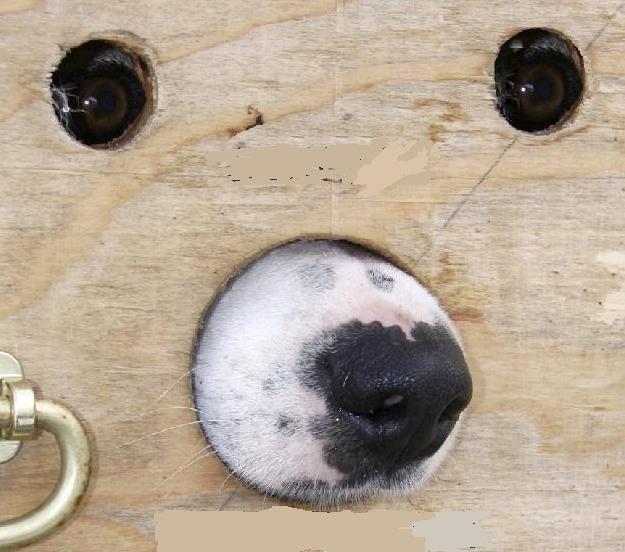 Glory Hole. .. moisturize me Animals pets Dogs hello well glory hole tags