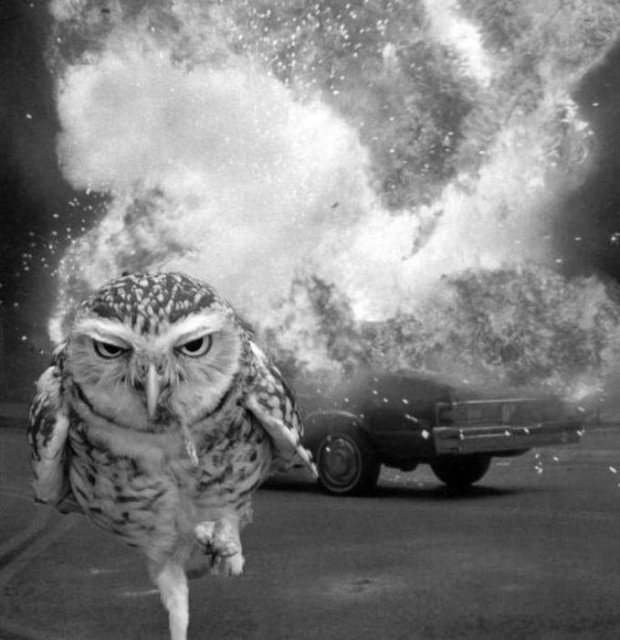 Go ahead...laugh owl you want.. lolol. Go ahead laugh owl you want lolol