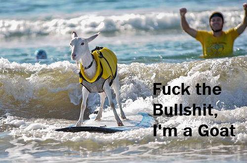 Goat. . goat surfing