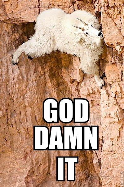 God Damn It. Poor Goat.. GOD RAM IT! goat God Damn it