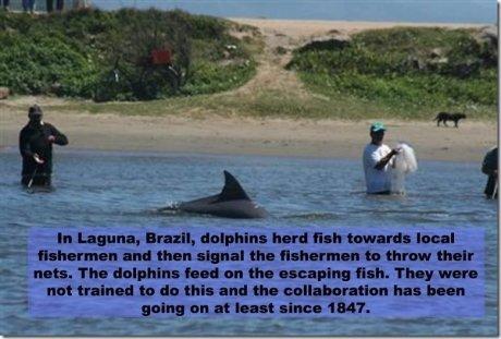 good guy dolphin. . human Birtday, haul '. reat local c- E.. Emma it'd than signal its ' 'Muir j.- er- nah. Thu an till scanning fish. 'rhey. amuro u not : I. h good guy dolphin human Birtday haul ' reat local c- E Emma it'd than signal its 'Muir j - er- nah Thu an till scanning fish 'rhey amuro u not : I h