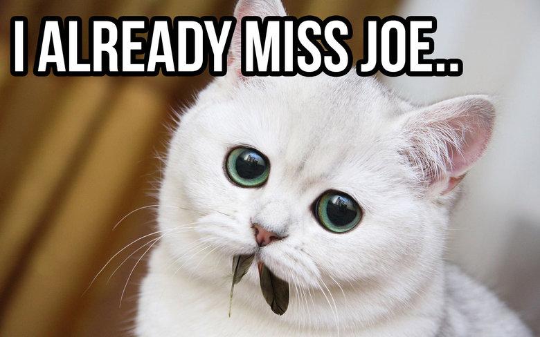 Good old Joe. FRESH OC. good old joe