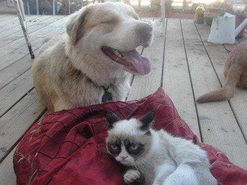 Grumpy Cat meets happy dog. .. I smell a sitcom! grumpy cat Dog