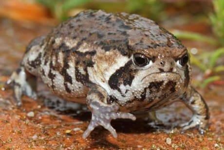 Grumpy cat's friend, grumpy frog!. . Grumpy cat has a friend