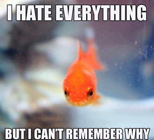 Grumpy Goldfish. . limit:. Perky pufferfish is perky. Grumpy goldfish